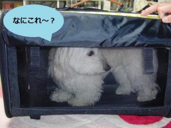 オレオINバッグ①