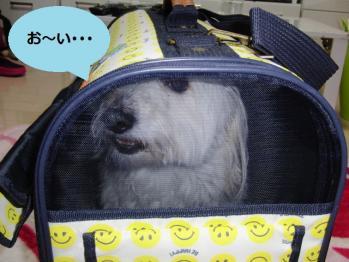 オレオINバッグ②