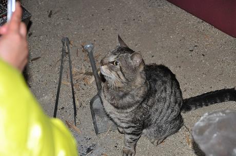 キャンプ場で猫と遭遇