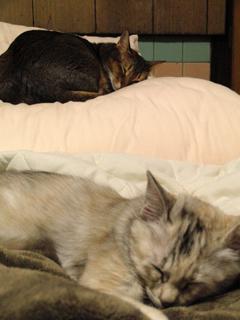 猫、シンクロ。