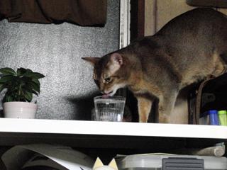 ナラ、コップの水を飲む。