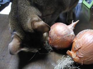 玉ねぎと猫2