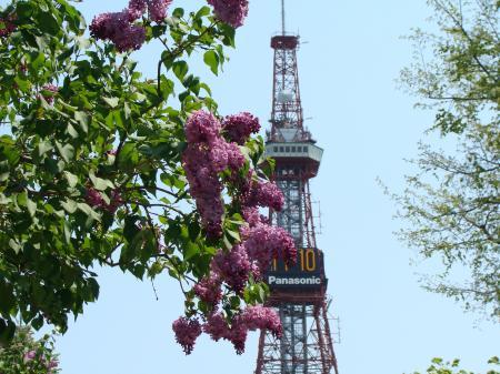 テレビ塔ライラック3