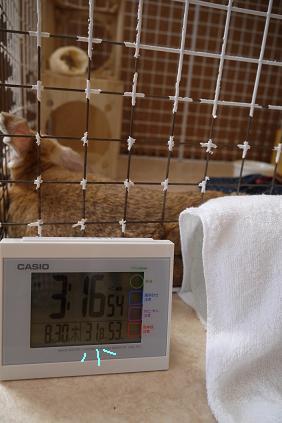 31℃超え