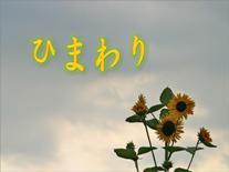 himawari_title_mixi.jpg