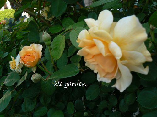 6_20120514191857.jpg
