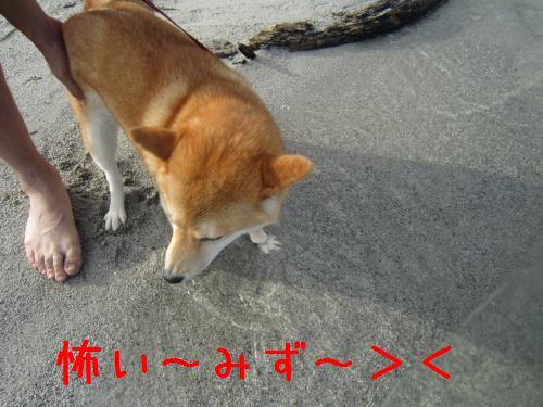IMG_1250_convert_20100809234646.jpg