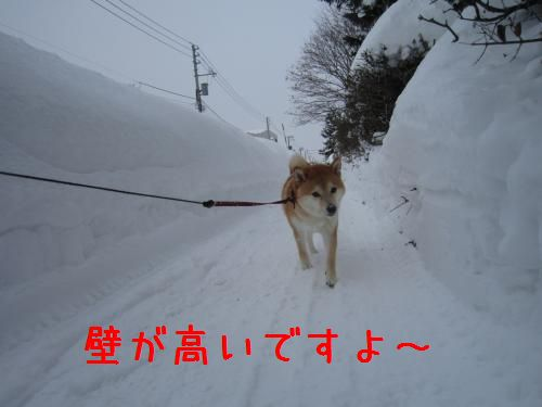 IMG_2420_convert_20110116171157.jpg