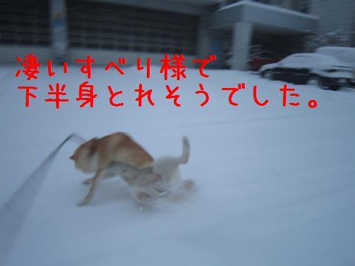 IMG_2933_convert_20110305224819.jpg