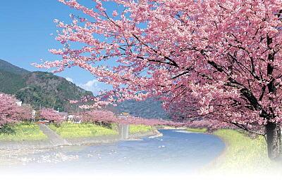 いずれ咲く春の花