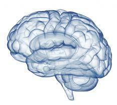 brain2014910.jpg