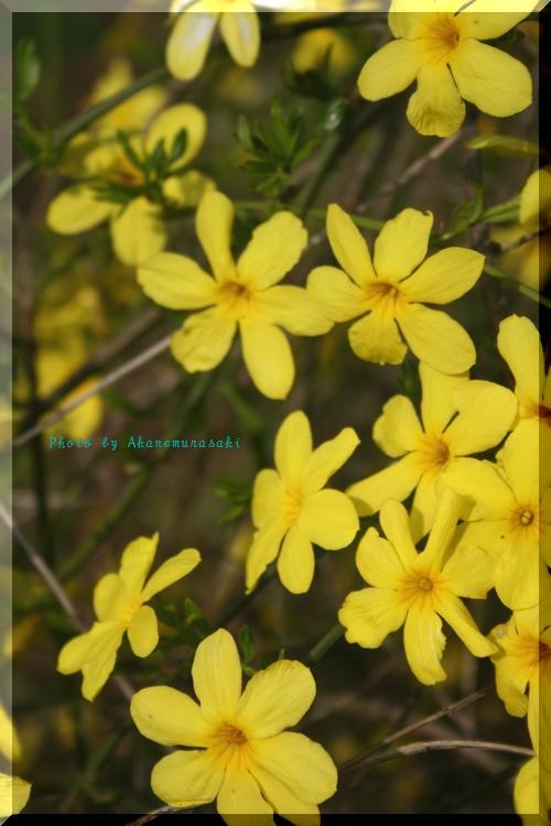 黄色い花(って誰が見てもわかるけど…)