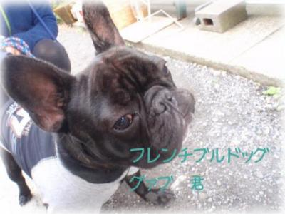 furennchi+buru縲�01_convert_20101215192754
