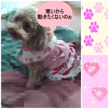 aair+ichigo+buiburi_convert_20110121133604.jpg
