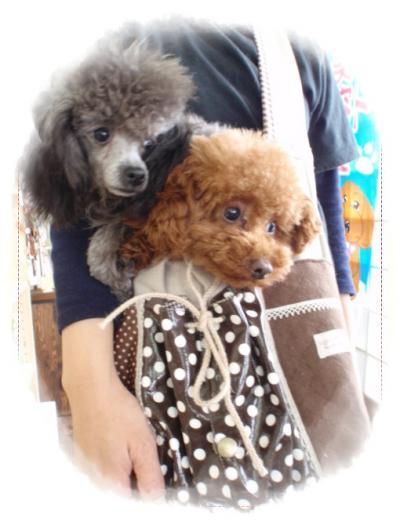 choko+bag+c_convert_20110304150228.jpg