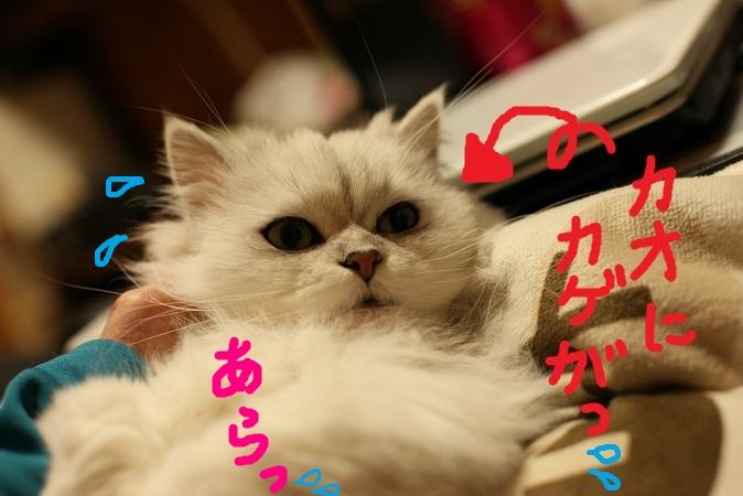 (10)_20121130201429.jpg