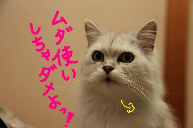 (10)a_20120623053204.jpg