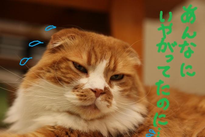 (2)_20120603221856.jpg