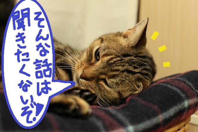 (2)a_20121118061113.jpg