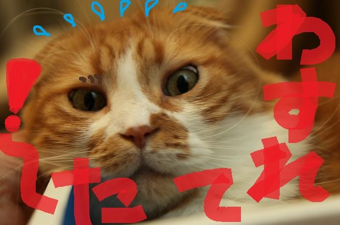 (4)_20120820055840.jpg
