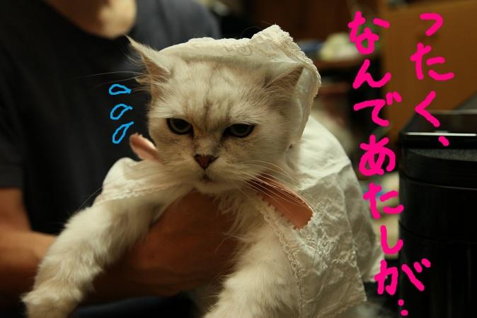 (7)_20120701011634.jpg