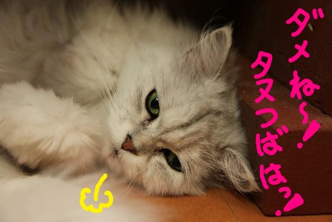 (9)_20120603222026.jpg