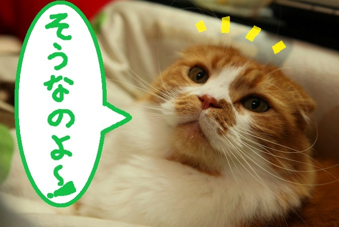 (2)そうなのよ~!