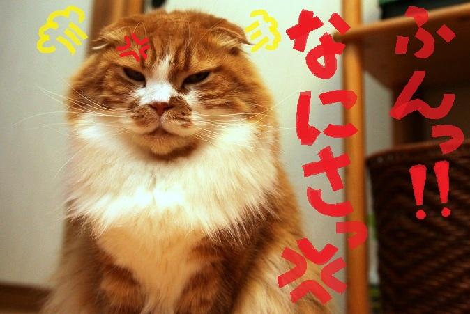(4)ふんっ怒