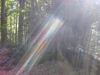 真名井神社の光