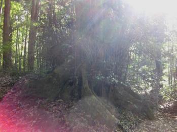 真名井の光3
