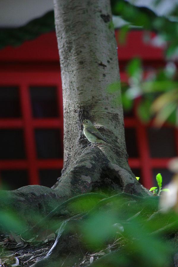 kibi2010101004.jpg