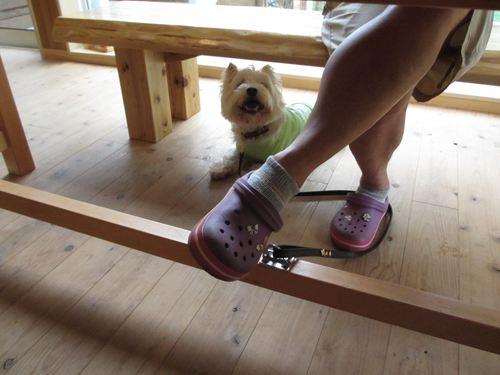 dog cafe haet_20120917_008_R