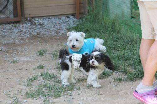 dog cafe haet_20120917_069_R