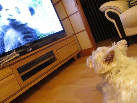 TVmiruko.jpg