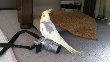 オカメカメラ