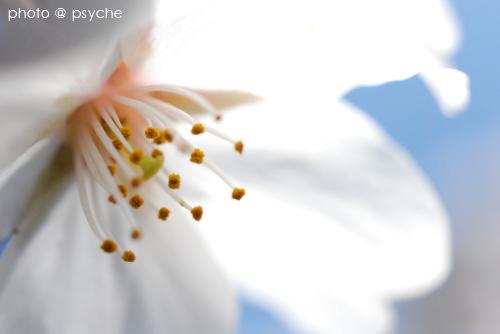 桜色の吐息
