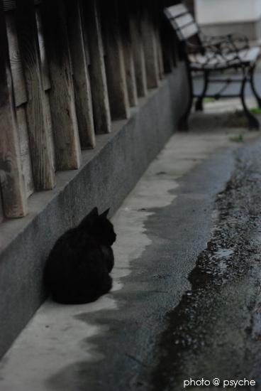 雨と軒下と黒い猫。
