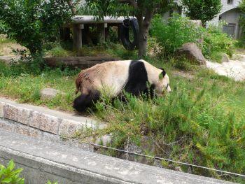 王子動物園01