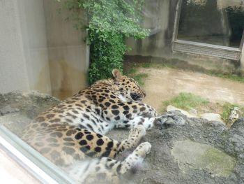 王子動物園02