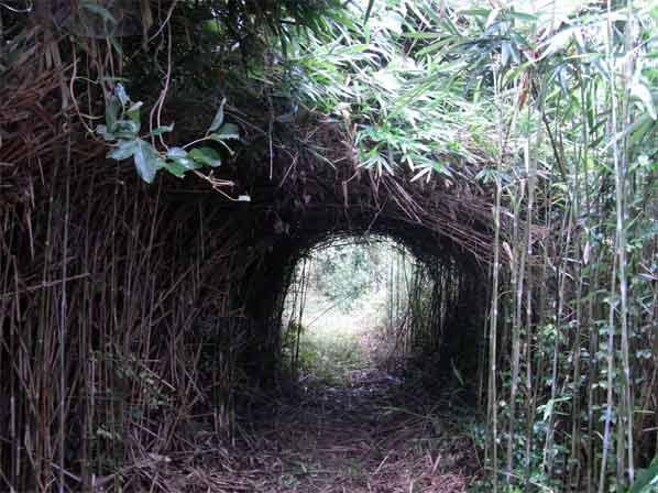 笹(矢竹)のトンネル