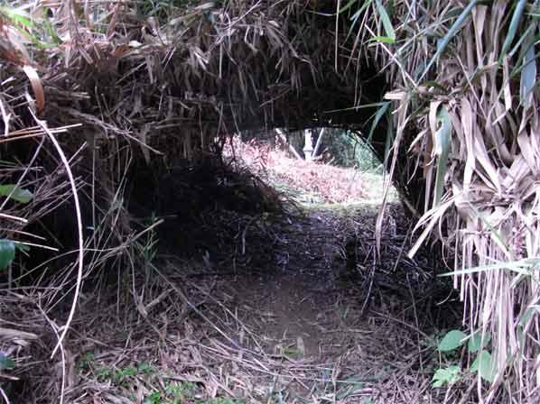 アセのトンネル