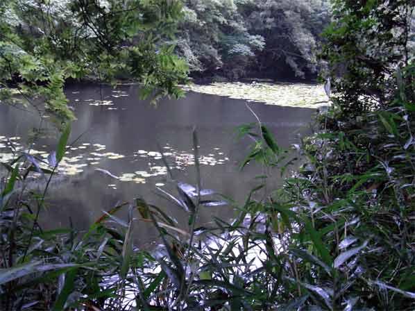 サブタニ池