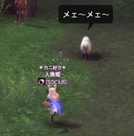 羊を追いかける