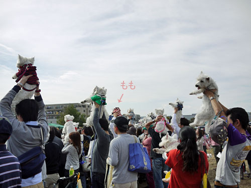 20111113②