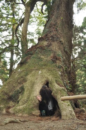 巨大な杉の木