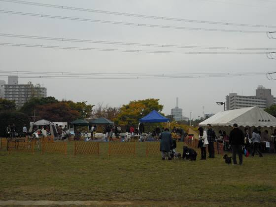 2010 11 14 001