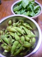 8月2日収穫物・2