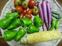 8月2日収穫物・1