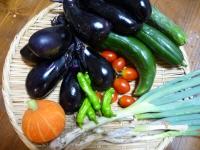 8月5日収穫物・1