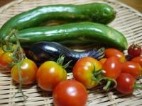 8月16日収穫物